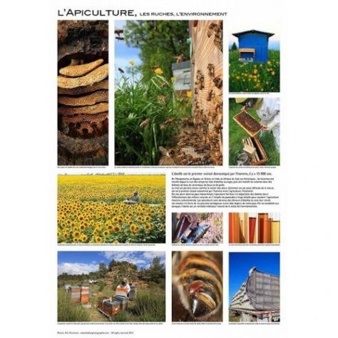 Poster Eric Tourneret (Fond Blanc) Apicultures/castes/reine/pollinisation/colonie