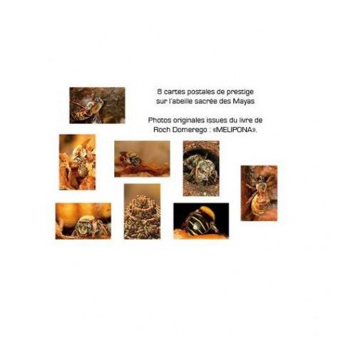 Carte postale mélipona 10 pièces